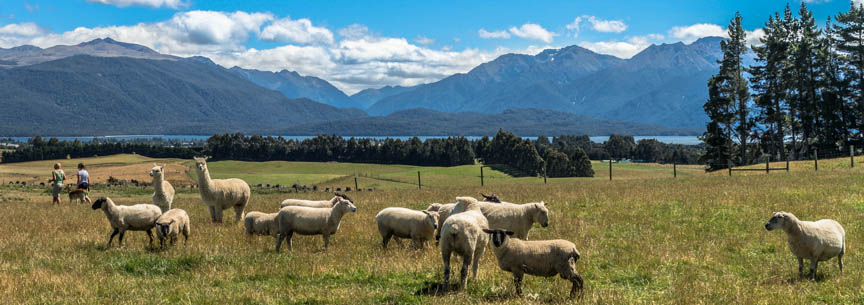 Farm Tours in Te Anau and Manapouri, Fiordland