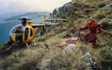 helicopter-venison-recovery-fiordland